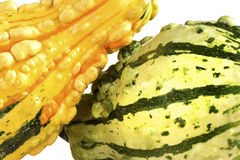 Fall Squash or Gourds in Closeup Stock Image