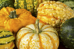 Fall Squash or Gourds in Closeup Royalty Free Stock Photo