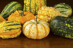 Fall Squash or Gourds in Closeup Royalty Free Stock Images