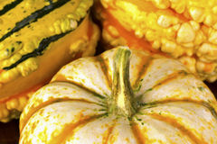 Fall Squash or Gourds in Closeup Stock Photo