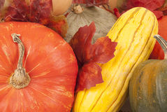 Fall squash multi color close up thanksgiving Royalty Free Stock Images