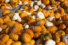 Fall squash of variety Royalty Free Stock Photography