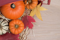 Fall squash on wood Stock Image