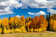 Fall in Steamboat Springs Colorado Stockfotos