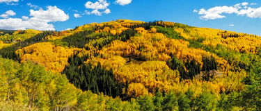 Fall in Steamboat Springs Colorado Stockfoto
