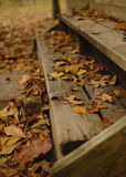 Fall Steps Stock Photography