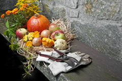 Fall still life Royalty Free Stock Photo