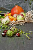 Fall still life Stock Images