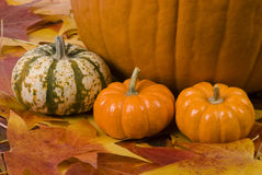 Fall Still Life. Still life with pumpkin, small gourds, and fall leaves Stock Photography