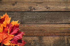 Fall still life. Colorful leaves on weathered wooden planks stock image