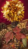 Fall still life with pine cones and maple leaves Royalty Free Stock Photos
