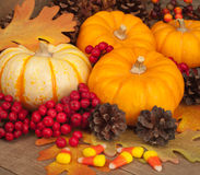 Fall Still Life with Pumpkins, Berries, and Corn Royalty Free Stock Photos