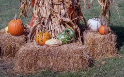 Natural collection of fall items make a beautiful still life royalty free stock photo