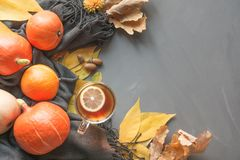 Fall still life, warm tea, pumpkin, gray scarf on pastel grey background. Top view and copy space. Fall still life, warm tea, pumpkin, gray scarf on grey royalty free stock photography