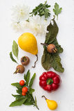 Fall Still Life. On a White Background Royalty Free Stock Image