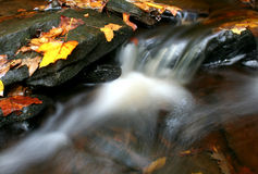 Fall Stream. Flowing Stream with fallen leaves royalty free stock photography