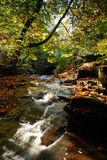 A Fall Stream Royalty Free Stock Image