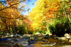 Fall stream. A stream in the Smokey Mountains in the fall Royalty Free Stock Image