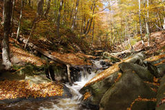 Fall Stream. Long exposure autumn waterfall with maple leaves Royalty Free Stock Images