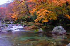In the fall of the stream. The water is very clear, both sides of the red and yellow leaves.The photography place is the Chinese Sichuan Nanjiang County's Mt Stock Image