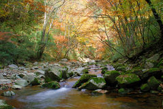 In the fall of the stream. The water is very clear, both sides of the red and yellow leaves.The photography place is the Chinese Sichuan Nanjiang County's Mt Royalty Free Stock Images
