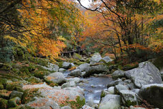 In the fall of the stream. The water is very clear, both sides of the red and yellow leaves.The photography place is the Chinese Sichuan Nanjiang County's Mt Royalty Free Stock Image