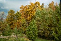 Fall-Sturm Stockfoto