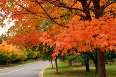 Fall in the suburb Royalty Free Stock Photography