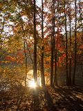 Fall Sun Royalty Free Stock Image