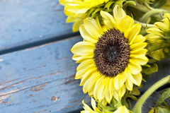 Fall Sunflowers Royalty Free Stock Image