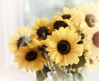 Fall Sunflowers bouquet in window with high key natural light and background with room or space above and on sides for copy, text royalty free stock photography