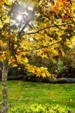 Fall sunlit tree stock photos