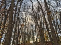 Fall Sunset Beyond the Bare Trees Stock Images