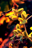 Fall Sunset On Burdock Royalty Free Stock Image