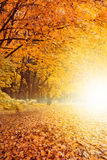 Fall sunset in park. Beautiful autumn background - yellow, orange, red leaves, bright fall sunset in park stock photos