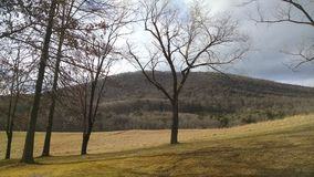 Fall surroundings. Bare tree mountain view Stock Photography