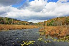 Fall Swamp Royalty Free Stock Image