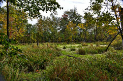 Fall swamp. Trees water wet green algae sky downed yellow Stock Photo