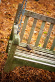 FALL SWING. Photo of swing against fall leaves on the ground Stock Photography