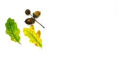 Fall symbols decoration on white Stock Photo