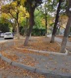 Fall in Tbillisi. Autumn in tbillisi is very good stock photo