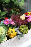 Fall terrace decorations with lot of flowers and other decor veg Stock Images