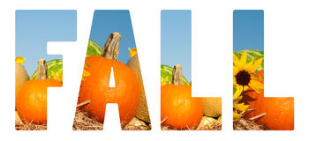 Fall text with autumn harvest, on white Stock Images