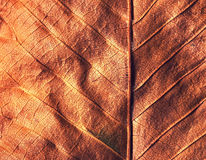 Fall texture leave detail Royalty Free Stock Photography