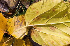Fall texture Stock Photography