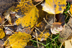 Fall texture Royalty Free Stock Photography