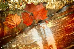Fall textures. Leaves wood rocks and metal for a fall background.  The wood piece is for copy space Stock Photography