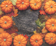 Fall Thanksgiving Background. With leaves Royalty Free Stock Photography