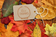 Fall Thanksgiving Background. With leaves Stock Image