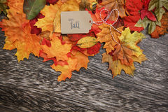 Fall Thanksgiving Background. With leaves Stock Photos